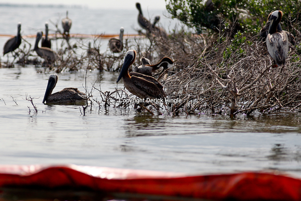 A line of containment boom lies in front of a barrier island in Bay Conquille that is home to a variety of birds off the coast of Louisiana, U.S., on Tuesday, June 15, 2010.  Oil from Deepwater Horizon spill continues to impact areas across the coast of gulf states.(Mandatory Credit: Derick E. Hingle).