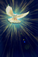 """I saw the Spirit descend like a Dove - Painting by Dino Carbetta – Azure""…<br />