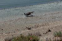 Foto di uccelli, fauna , natura Foto natura, oasi natualistica di molentargius