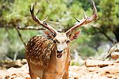 Israeli Wildlife