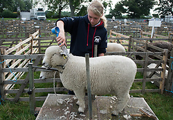 © Licensed to London News Pictures. <br /> 29/07/2014. <br /> <br /> Kirkbymoorside, United Kingdom<br /> <br /> A girl clips her sheep as she prepares for judging at the Ryedale agricultural show in North Yorkshire. The show was established in 1855 and is a traditional agricultural show renowned for its high standards of entries into the numerous livestock categories.<br /> <br /> Photo credit : Ian Forsyth/LNP
