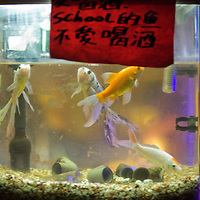 BEIJING, SEPT.30 : A fishtank is seen in  School bar, a new trendy music venu in Beijing.