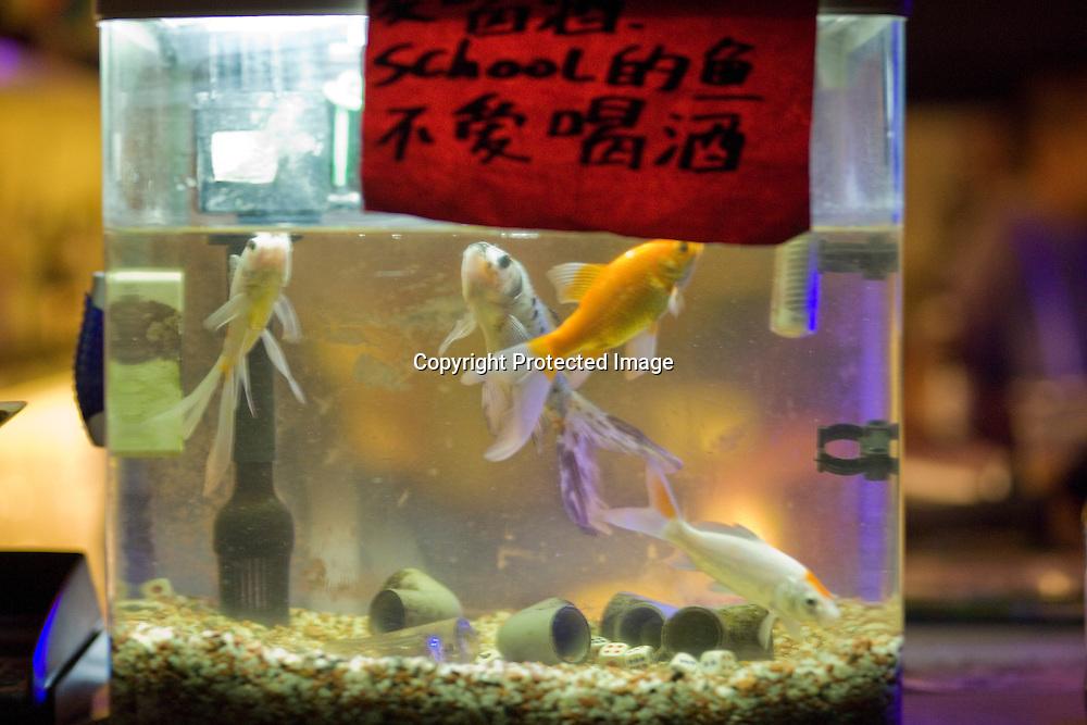 BEIJING, SEPT.30 : A fishtank is seen in  School bar, a new trendy music venu in Beijing.