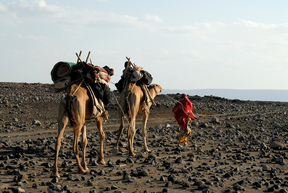 Afar woman on her way home with two camels, Lac Abbé, Djibouti, 2007