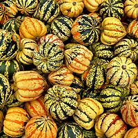 Ornamental Specialty Pumpkins at Farmers Market in Montreal, Canada