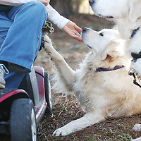 Lauren Wood | Buy at photos.djournal.com<br /> Patty Aguirre pets her golden retriever Rani as her service dog Shai sits nearby Friday afternoon at her Tupelo home.