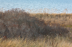 Fall landscape in The Northwest Harbor of East Hampton, NY