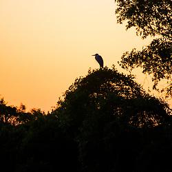 """""""Amanhecer no Pantanal (Paisagem) fotografado em Corumbá, Mato Grosso do Sul. Bioma Pantanal. Registro feito em 2017.<br /> <br /> <br /> <br /> ENGLISH: Breaking Dawn in the Pantanal photographed in Corumbá, Mato Grosso do Sul. Pantanal Biome. Picture made in 2017."""""""