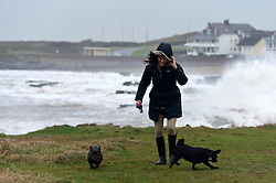 © Licensed to London News Pictures. 03/02/2017. Porthcawl, Mid Glamorgan, Wales, UK. Freelancer, Mel Metcalf from Porthcawl, Mid Glamorgan, walks her dogs on the headland as huge waves hit the South Wales resort of Porthcawl in Mid Glamorgan, Wales, UK. Photo credit: Graham M. Lawrence/LNP