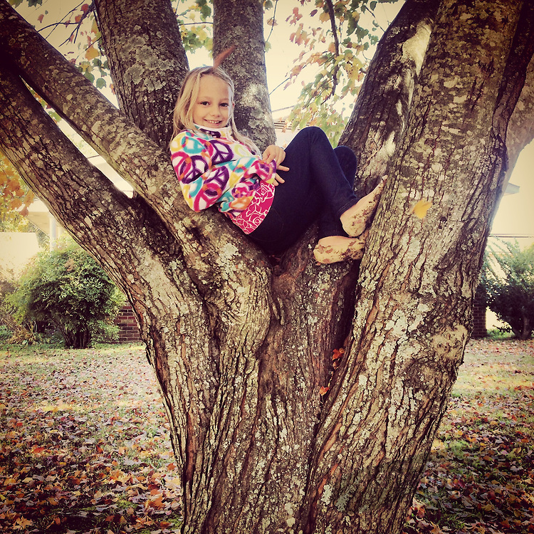 Gary Cosby Jr.  iPhone photographs  A child climbing a tree finds a comfortable perch.