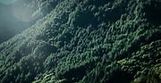 Forested Mountain slopes in the Italian Alps near Sondrio, Lombardia<br /> Redbubble --&gt; https://rdbl.co/2rpx1dn