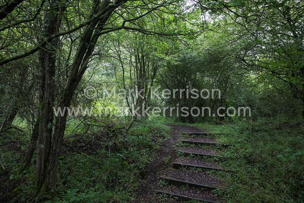 Calvert, UK. 27 July, 2020. A path winds its way up steps through trees and undergrowth at Calvert Jubilee Nature Reserve. On 22nd July, the Berks, Bucks and Oxon Wildlife Trust (BBOWT) reported that it had been informed of HS2's intention to take possession of part of Calvert Jubilee nature reserve, which is home to bittern, breeding tern and some of the UK's rarest butterflies, on 28th July to undertake unspecified clearance works in connection with the high-speed rail link.