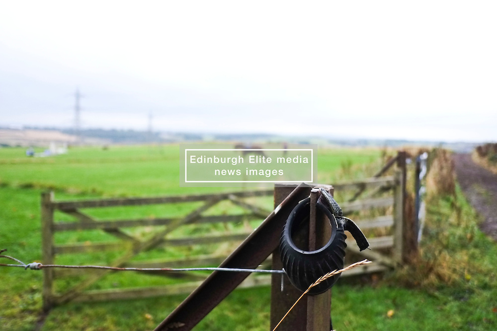Winter is coming to Edinburgh as the leaves turn and thoughts turn to hot chocolate and warm fires as you write your Christmas cards. Matter the weather the animals still need exercise<br /> <br /> (c) Ger Harley |  Edinburgh Elite media