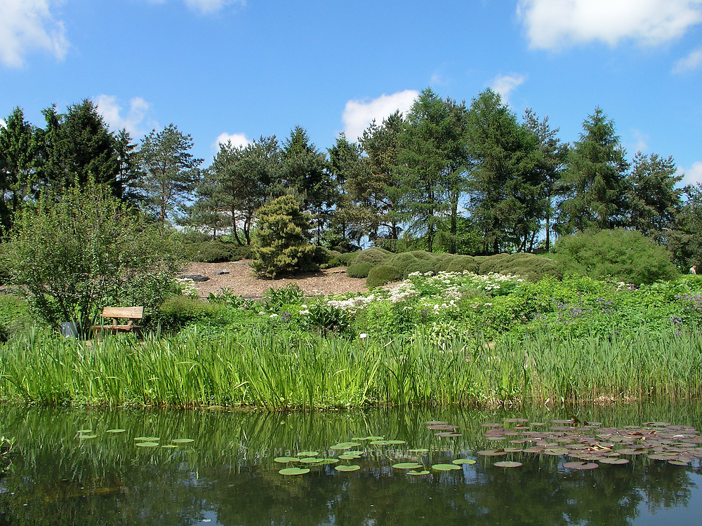 hier in Klein-.Flottbek sind seit 1979 die.Pflanzen der Erde versammelt..Es gibt Wald und.Steppe, einen nordamerikanischen.und einen asiatischen.Bereich. Heilpflanzen,.Nutz- und Giftpflanzen.haben hier genauso.Platz wie Rosen, Rhododendren.und anderes, was.einfach nur schön aussieht.