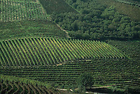 October 1992, Piedmont, Italy --- Green Langhe Vineyards --- Image by © Owen Franken/CORBIS