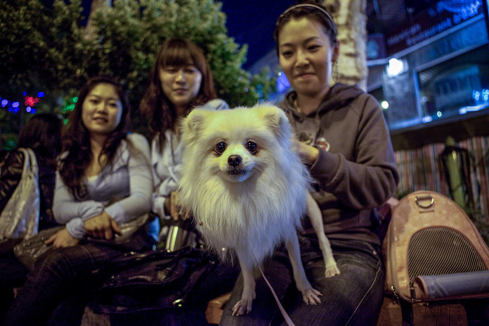 Young ladies with dog at the Hongdae quater. Hongdae area is an entertainment area and clubbing district in northwest Seoul, South Korea - close to the Hongik University.