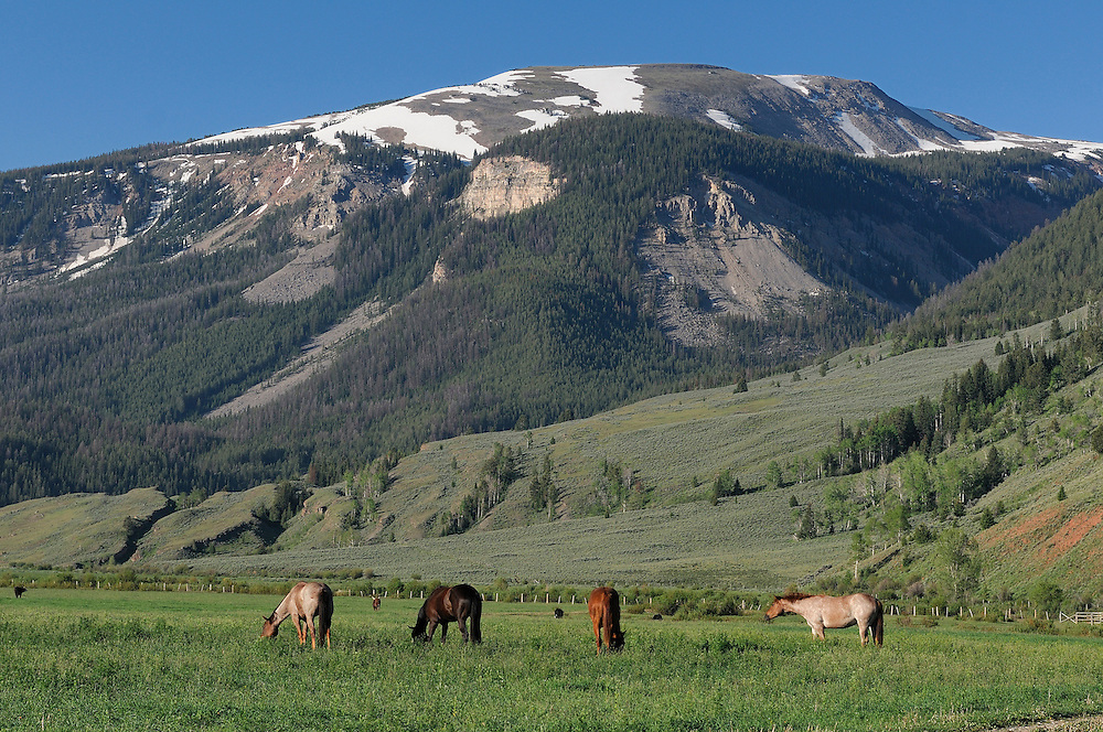 Horses on meadow, Red Rock Ranch, Guest Ranch, Bridger-Teton Wilderness, near Kelly, Wyoming, USA