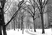Winter in Central park NYC 2011