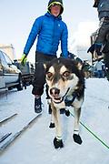 Avalanche och Mikael Sundström från Rovaniemi som hjälper Mats Pettersson vid den ceremoniella starten av 2017 Iditarod, Anchorage, Alaska, USA
