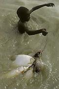 Africa, Sahel region, Chad, Islands of Lake Chad. Buduma boy carrying fish caught in nylon net in Lake Chad.
