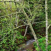 Purisima Creek, Purisima Creek Redwoods Preserve, California