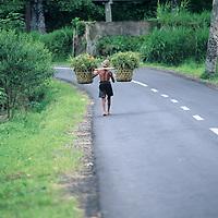 Bali, rice field farmer, moving harvest in baskets