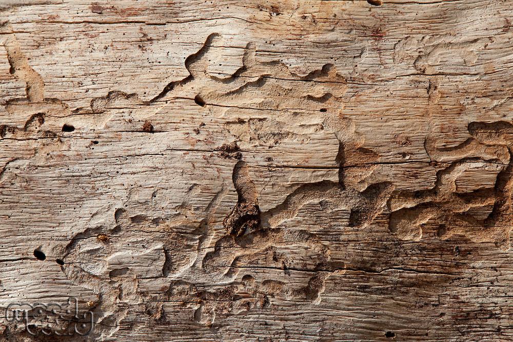 Close-up shot of wood grain pattern