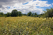 Herbaceous wildflowers including Meadowsweet, Filipendula ulmaria.  In a field in The Cotswolds, Oxfordshire, UK
