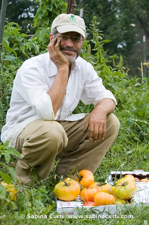 Dominic Palumbo, picking organic heirloom tomatoes on Moon in the Pond Farm, Sheffield, MA