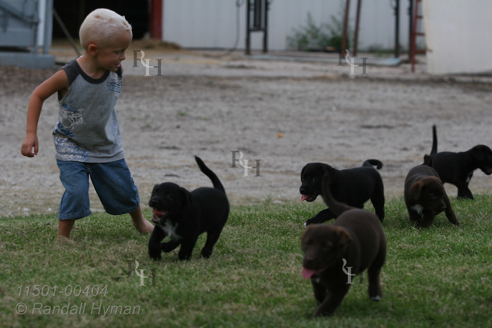 Four-year-old boy plays with puppies on his farm in Lee County, southeast Iowa.