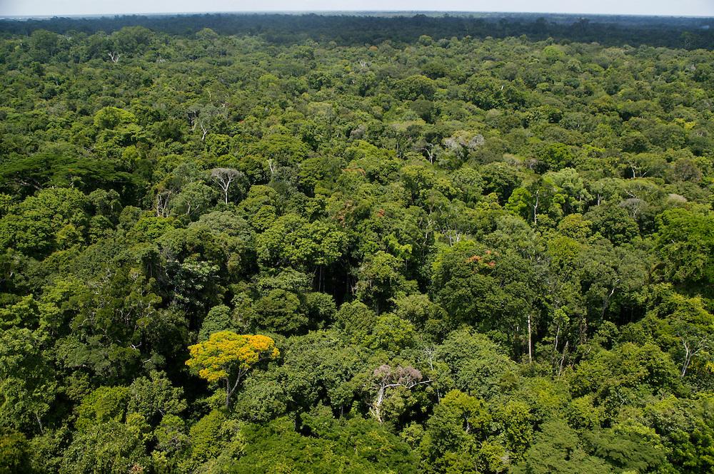 Nov. 8, 2003.Forestland near Gurupa in Para State, Brazil.