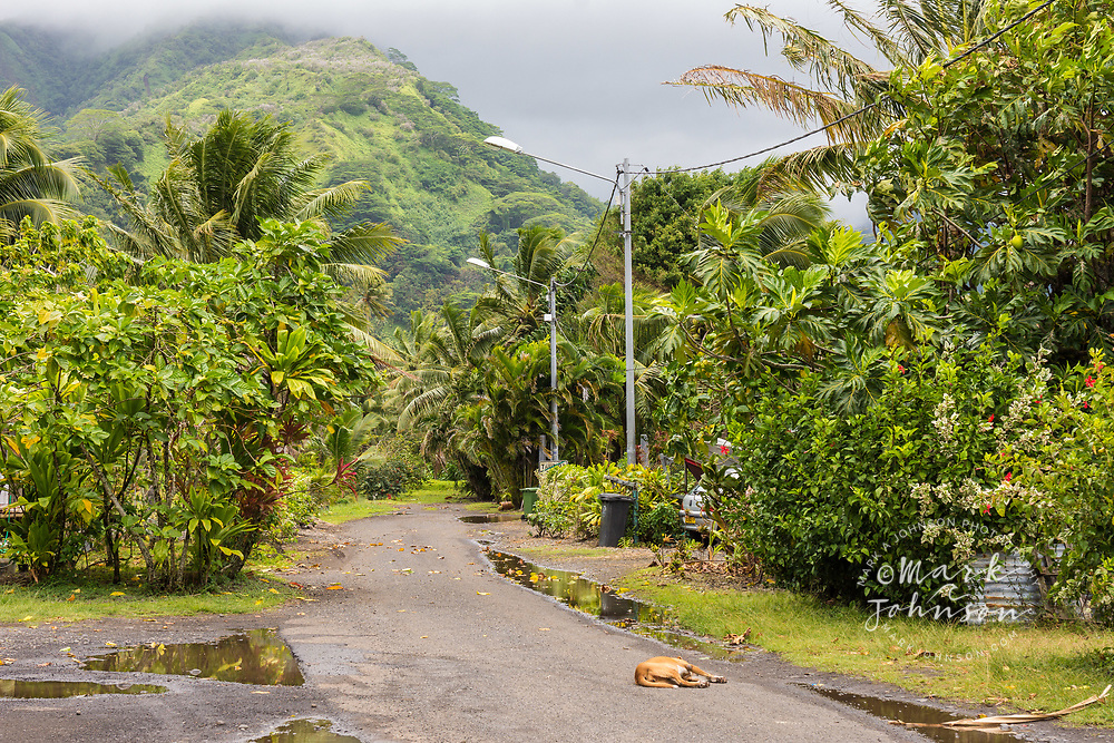 A dog sleeping in the quiet streets of Tautira, Tahiti, French Polynesia