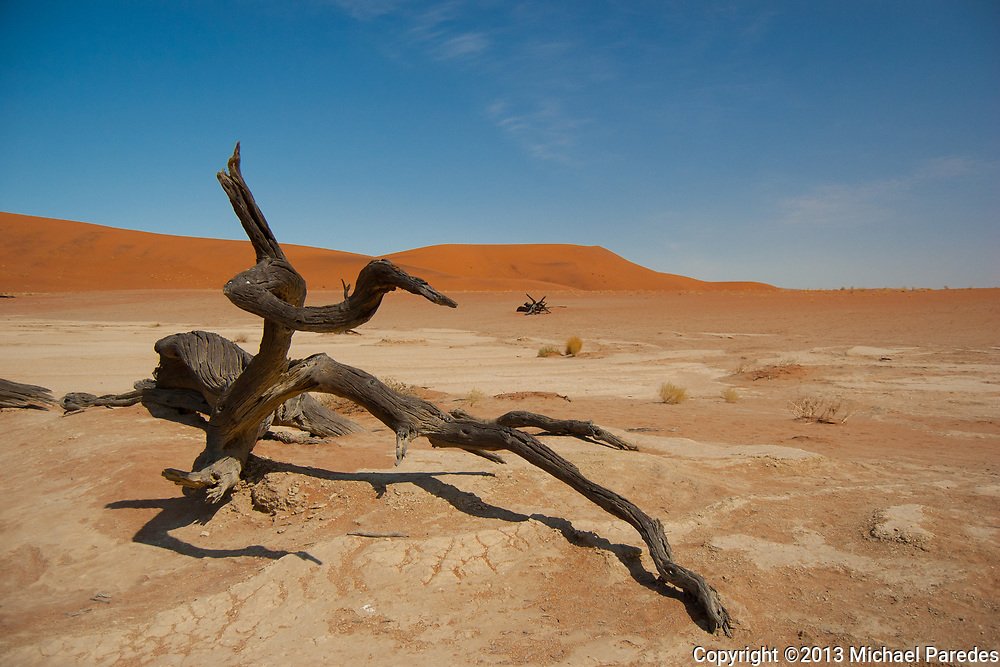 A dead tree appears to be reaching for something…water? At Namib-Naukluft National Park, Namibia