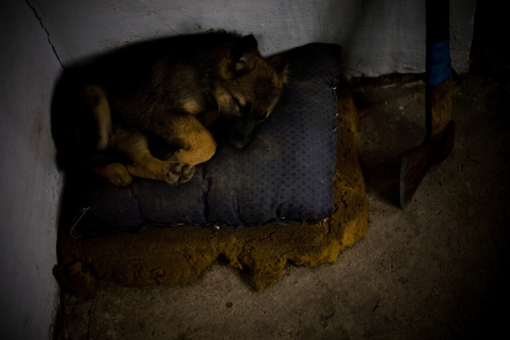 CREDIT: DOMINIC BRACCO II..SLUG:PRJ/KAZAKHSTAN SHEEP HERDERS..DATE:10/21/2009..CAPTION:A dog sleeps at a sheepherders home in Kazakhstan. The herders live near a radio active lake which was made during the 1970s as part of an experiment by the USSR to create lakes from atomic bombs. The lake is in an area known as The Polygon, a test site for more than 400 of the Soviet Union's nuclear weapons.