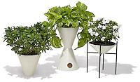 houseplants in modern flower pots