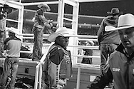 Rodeo 11, Sydney