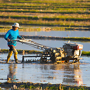 A Thai rice farmer in Chiang Rai province, northern Thailand, preparing his fields with a home made cultivator.