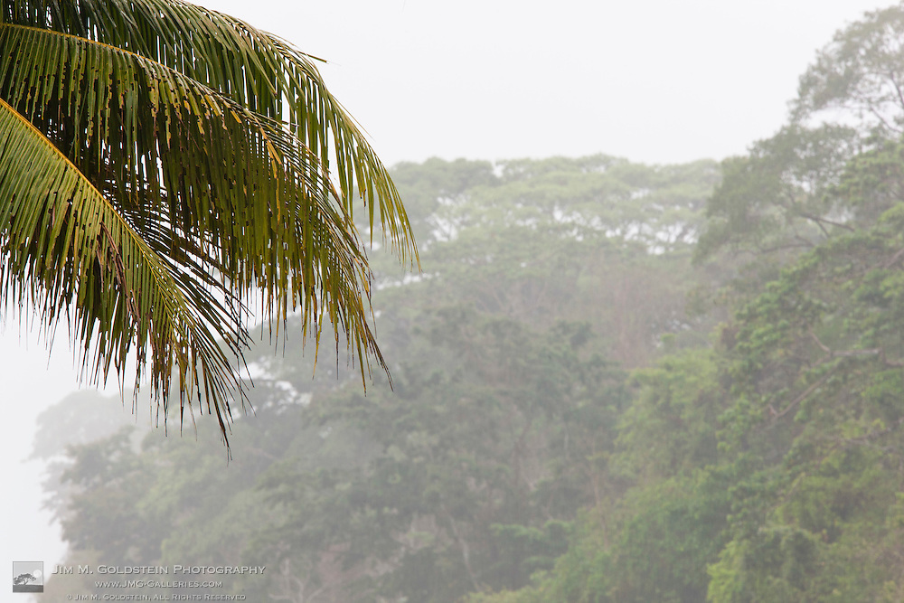 Heavy rainfall in the Costa Rican Rainforest of Corcovado National Park