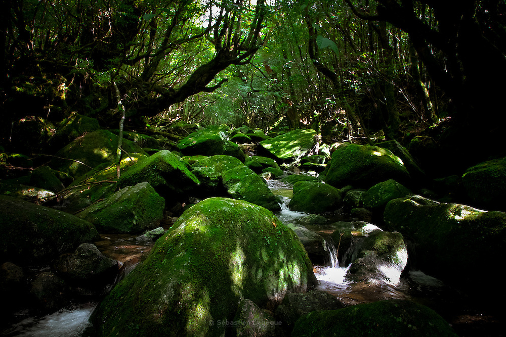 Japan, Yakushima - Rocks covered with moss in a middle of a mountain torrent.