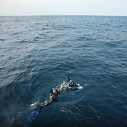 Joe Sheridan breathes up at the surface, preparing for a  dive while spearfishing in the Gulf Stream off the coast of NC.