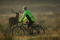 © Licensed to London News Pictures. 26/09/2015. City, UK. A cyclist rides past a stag at sunrise on a misty cold Autumn Morning in Richmond Park, London. Photo credit : Ian Schofield/LNP