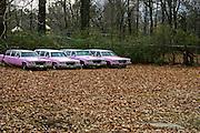 Pink Limousines on Elvis Presley Blvd. in Memphis, TN.