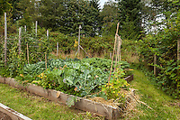 A variety of produce  grows in raised beds in an organic garden.
