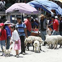 Almoloya de Juárez, Mex.- Pese a las promesas oficiales, el mercado de animales de San Bernabé en Almoloya de Juárez, sigue operando en pésimas condiciones sanitarias y de maltrato a los animales, por la falta de infraestructura adecuada. Agencia MVT / Crisanta Espinosa. (DIGITAL)<br /> <br /> <br /> <br /> NO ARCHIVAR - NO ARCHIVE