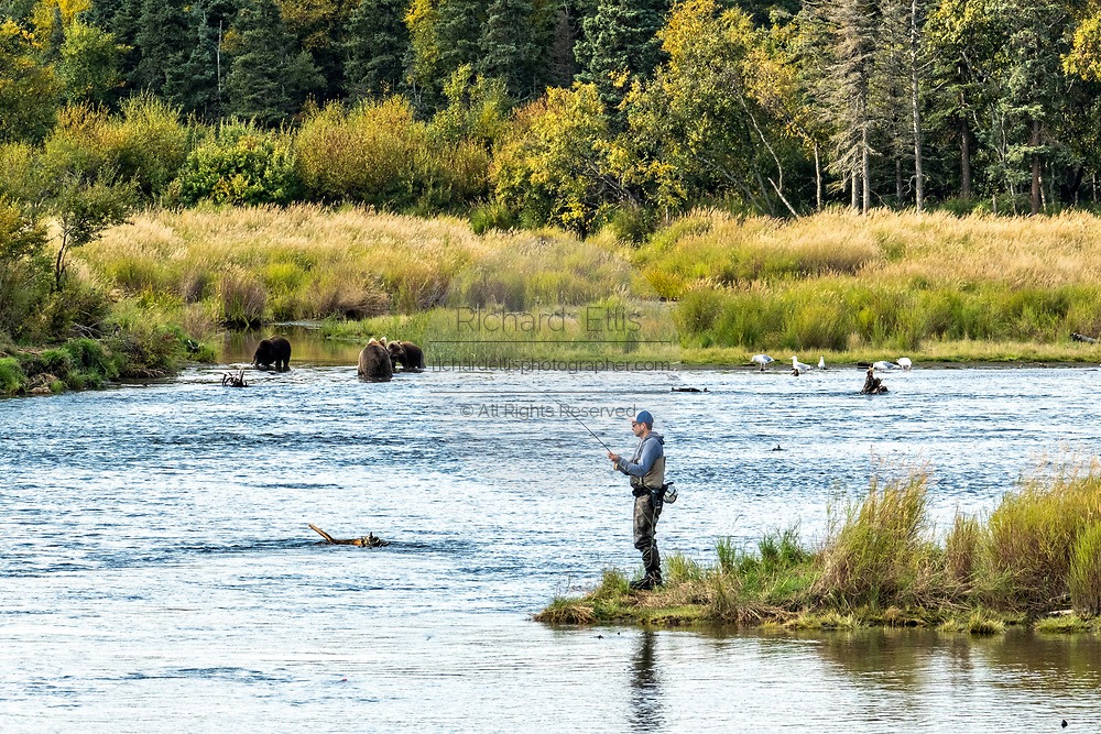 A fly fisherman fishes near a group of Brown Bears in the lower Brooks River at in Katmai National Park and Preserve September 16, 2019 near King Salmon, Alaska. The park spans the worlds largest salmon run with nearly 62 million salmon migrating through the streams which feeds some of the largest bears in the world.