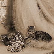 Monochrome of cat sitting on fishing nets, village of Vrboska, island of Hvar, Croatia