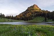 View of Yakima Peak at sunrise from Tipsoo Lake in Mount Rainier National Park, Washington State, USA
