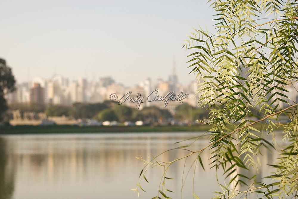Tree lined Ibirapuera Park, Sao Paulo, Brazil.