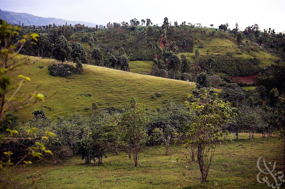 A garden style coffee plantation lies amid the rolling hills of the famed Sidamo coffee region February 23, 2007 near the village of Bokaso in southern Ethiopia.  Sidamo coffee is renowned worldwide for it's sweet flavor and fruity aroma, but for the farmers who grow it, it is proving less economically viable than alternative crops such as Chat.