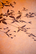 Shadow of flowers on wall